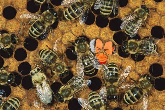 bees nuts.jpg