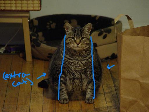 extra cat.jpg