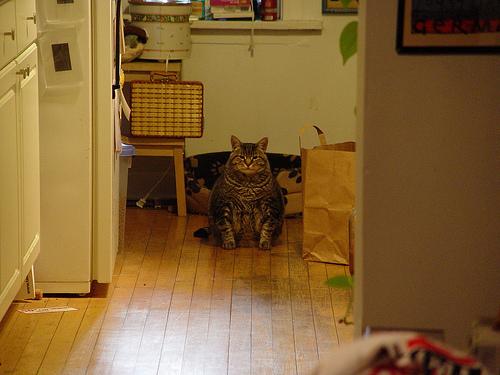 parker bulldog hallway.jpg